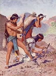 inka_kartoffelanbau
