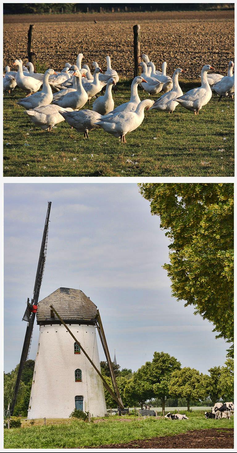 gaense-niederrhein
