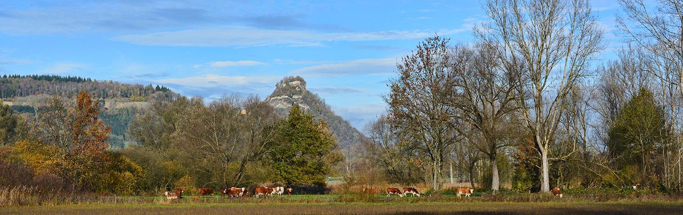 Hohenkrähen im Hegau (November)